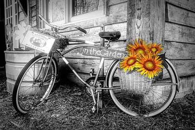 Photograph - Bicycle In The Garden Art In Black And White And Sunflowers by Debra and Dave Vanderlaan