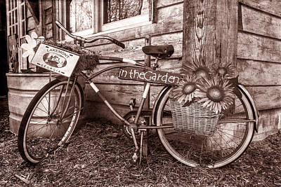 Photograph - Bicycle In The Garden Art In Sepia And Sunflowers by Debra and Dave Vanderlaan