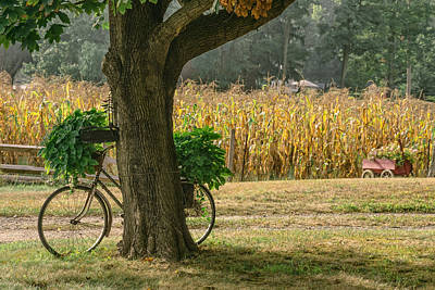 Photograph - Bicycle Planter by Andrew Kazmierski