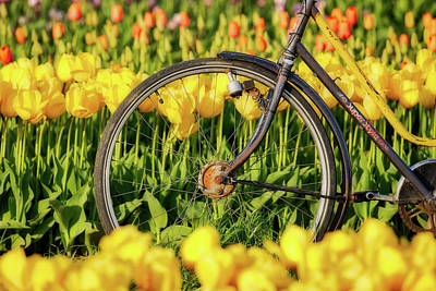 Photograph - Bicycle Wheel And Tulips by Jerry Fornarotto