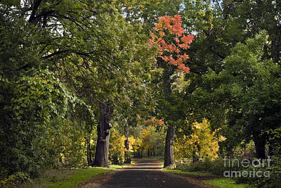 Bidwell Park By One Mile Art Print