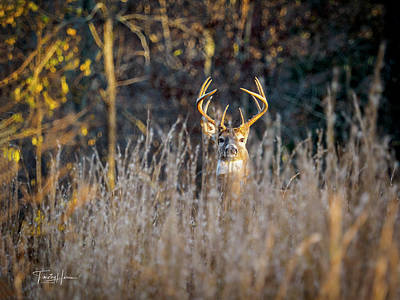 Photograph - Big 10 by Timothy Harris
