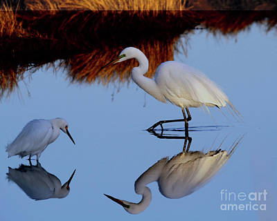 Photograph - Big And Small Reflection by Roger Becker