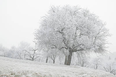 Photograph - Big Apple Tree In Hoar Frost Winter Landscape by Martin Stankewitz