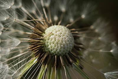Photograph - Big Bang by Robert Potts