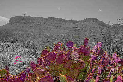 Photograph - Big Bend Cactus by Michael Tidwell