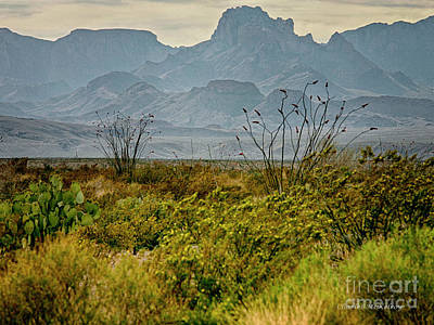 Photograph - Big Bend Mountains by Charles McKelroy