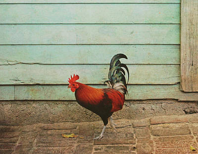 Photograph - Big Bird by JAMART Photography