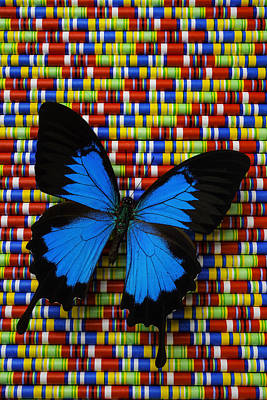 Vivid Colors Photograph - Big Blue Butterfly by Garry Gay