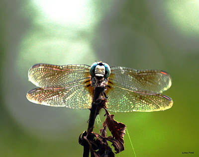 Photograph - Big Blue Dragonfly Art by Lesa Fine