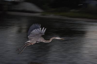Big Blue Heron In Flight-debbie-may Art Print by Debbie May