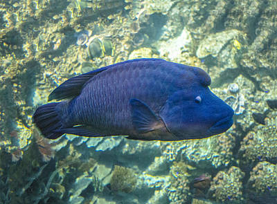Photograph - Big Blue Looks Down by William Bitman