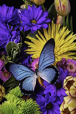 Gerbera Photograph - Big Blue Wings by Garry Gay