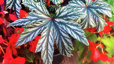 Photograph - Big Bold Exotic Leaves by Nareeta Martin