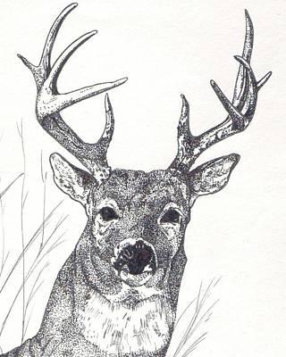 Big Buck Art Print by Debra Sandstrom