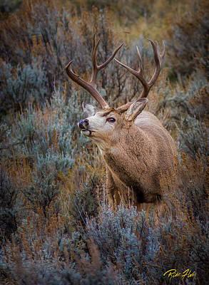 Achieving - Big Buck in the Brush by Rikk Flohr