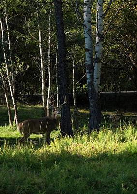 Photograph - Big Buck by Roy Nierdieck