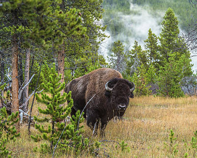 Photograph - Big Bull Coming My Way by Yeates Photography