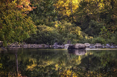 Big Bull In Buffalo National River Fall Color Art Print