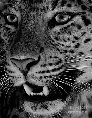 Art Print featuring the painting Big Cat II by Louise Fahy