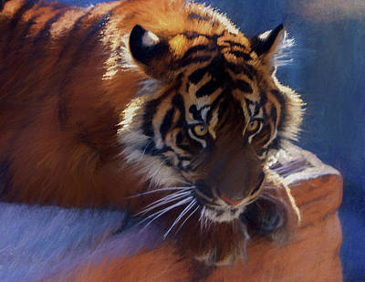 Digital Art - Big Cat In Chalk by Kandy Hurley