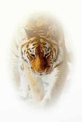 Photograph - Big Cat  by Karol Livote