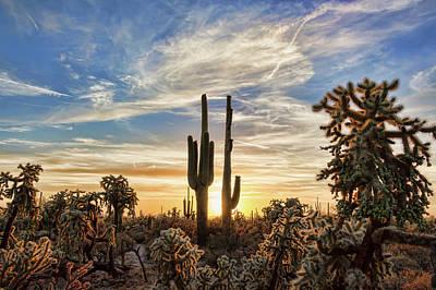 Photograph - Big Cholla Sunset by Ryan Seek