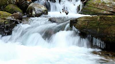 Photograph - Big Creek In The Great Smoky Mountains National Park by Carol Montoya