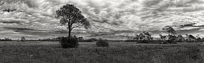 Photograph - Big Cypress 6396bw by Rudy Umans