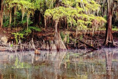 Photograph - Big Cypress Bayou Morning by Scott Pellegrin