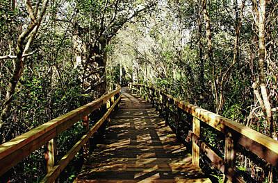 Photograph - Big Cypress Bend Boardwalk by Debbie Oppermann