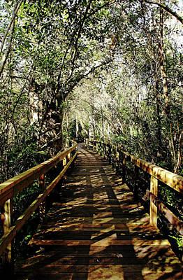 Photograph - Big Cypress Bend Boardwalk I by Debbie Oppermann