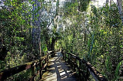 Photograph - Big Cypress Bend Boardwalk II by Debbie Oppermann