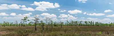 Tree Photograph - Big Cypress Marshes by Jon Glaser