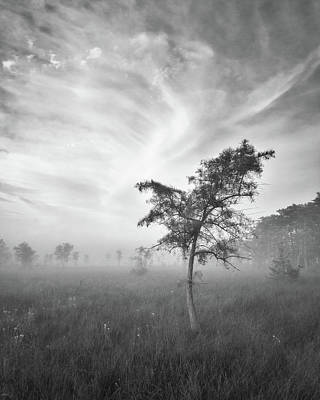 Photograph - Big Cypress Morning by Bill Martin