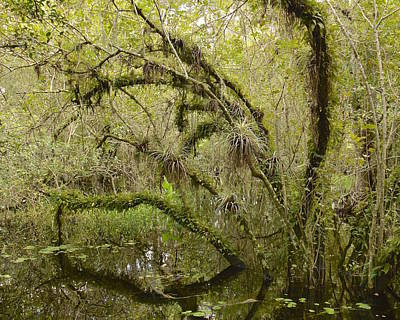 Photograph - Big Cypress National Preserve by Carol  Bradley