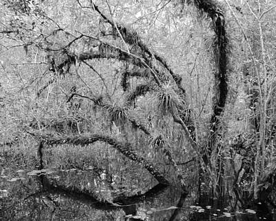 Photograph - Big Cypress National Preserve II by Carol  Bradley