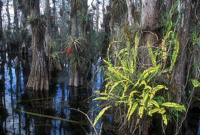 Photograph - Big Cypress National Preserve by John Burk