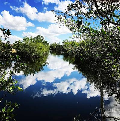 Photograph - Big Cypress National Preserve by Suzanne Lorenz