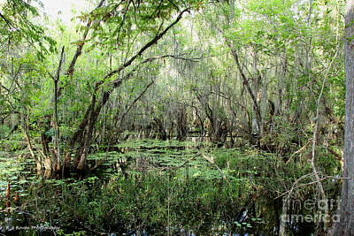Photograph - Big Cypress Preserve by Barbara Bowen