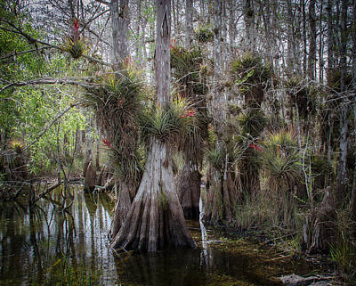 Big Cypress Preserve Art Print by Bill Martin