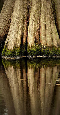 Photograph - Big Cypress Reflection Color by Nadalyn Larsen