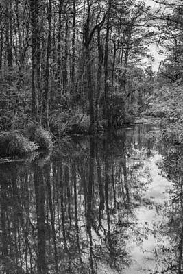 Big Cypress Stillness Art Print