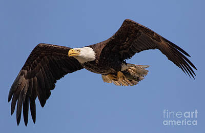 Photograph - Big Eagle by Beth Sargent