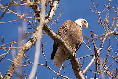 Firefighter Patents Royalty Free Images - Big Eagle Royalty-Free Image by Linda Kerkau