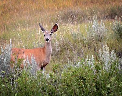 Photograph - Big Ears by Marty Koch