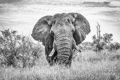 Photograph - Big Ellie Black And White by Jennifer Ludlum