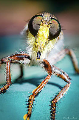 Photograph - Big Eye Fly by Erich Grant