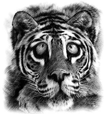 Digital Art - Big Eye Tiger by Artful Oasis