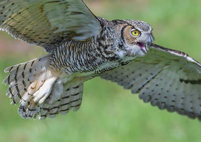 Photograph - Big Eyes... by Ian Sempowski